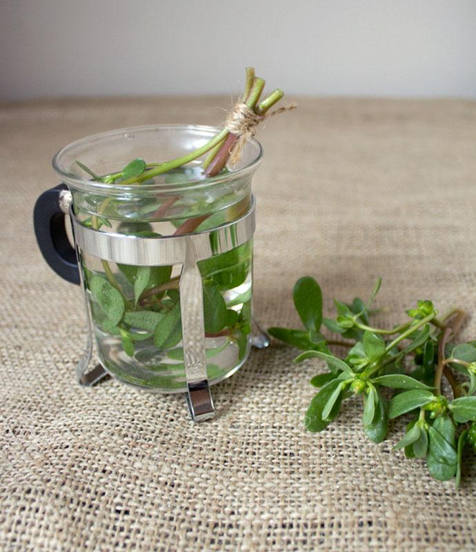 how to make purslane tea